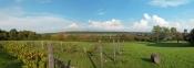 Hudson Valley vineyard view